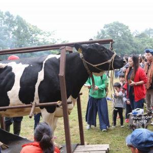 Dairy Farming Activity