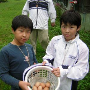 Chicken Farming Activity